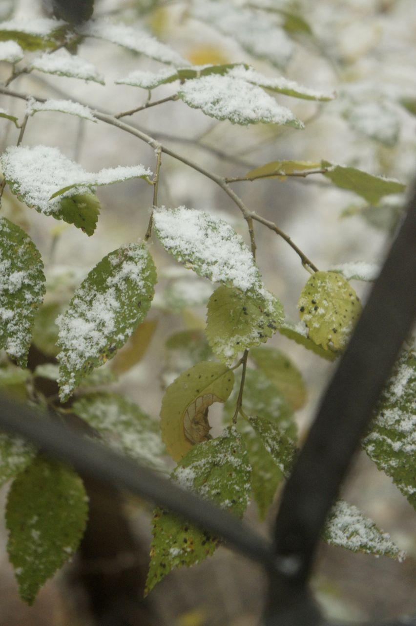 DSC1033 キルギスに冬の訪れ
