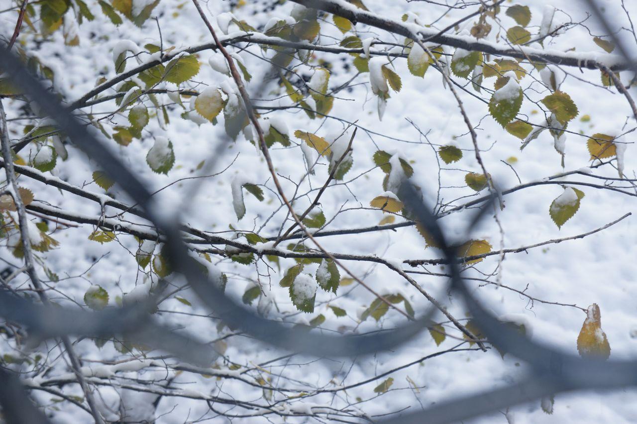 DSC1041 キルギスに冬の訪れ