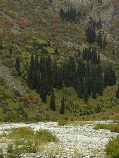 PICT0047 深まりゆく中央アジアの秋