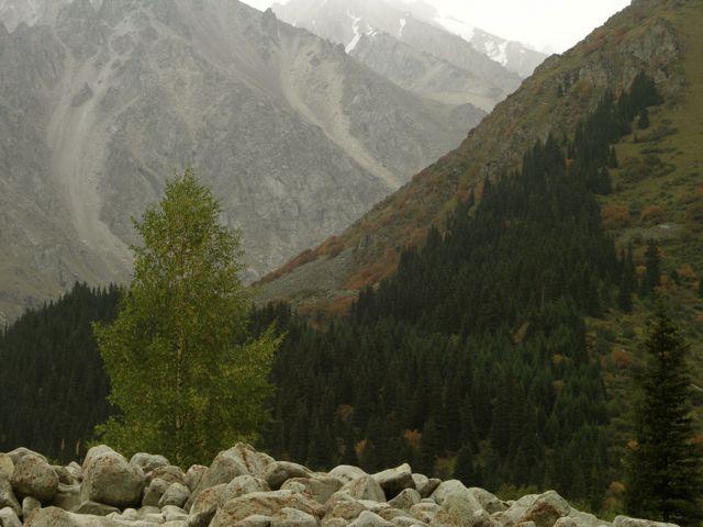 PICT0074 深まりゆく中央アジアの秋