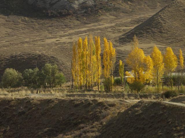 PICT0166 深まりゆく中央アジアの秋