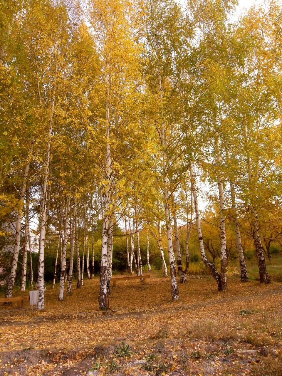 Tekeli in seasons 12 深まりゆく中央アジアの秋