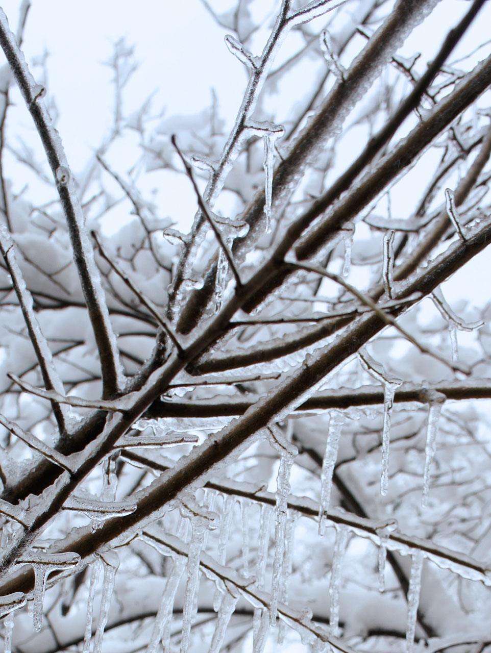 Snow on branches 2s キルギスの冬の朝