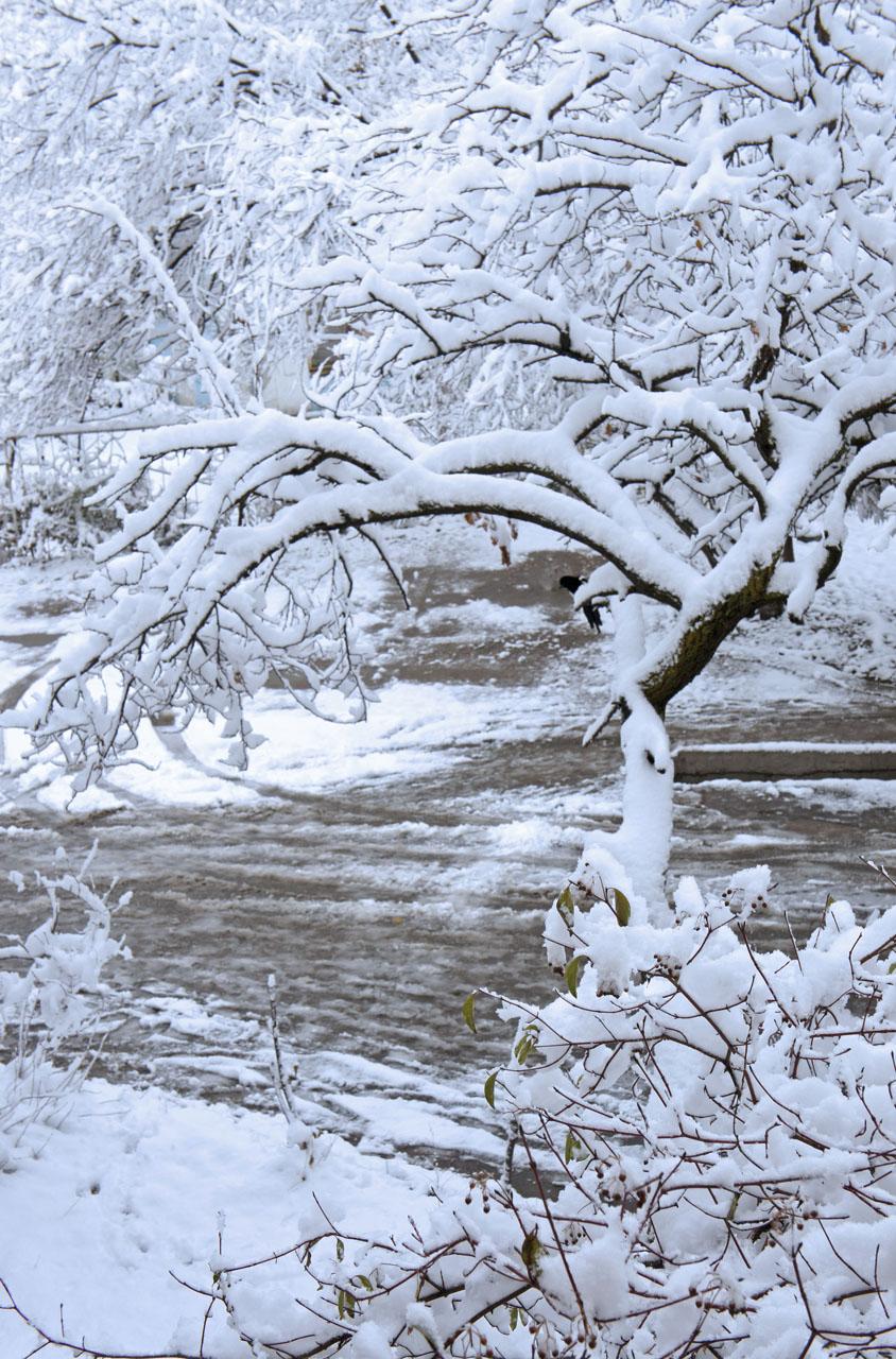 Snow on branches 5 キルギスの冬の朝