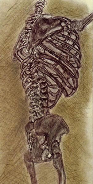 7. Skelton